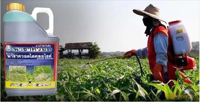 การแบนสารเคมีกำจัดศัตรูพืชอันตราย#2 พาราควอต (Paraquat)