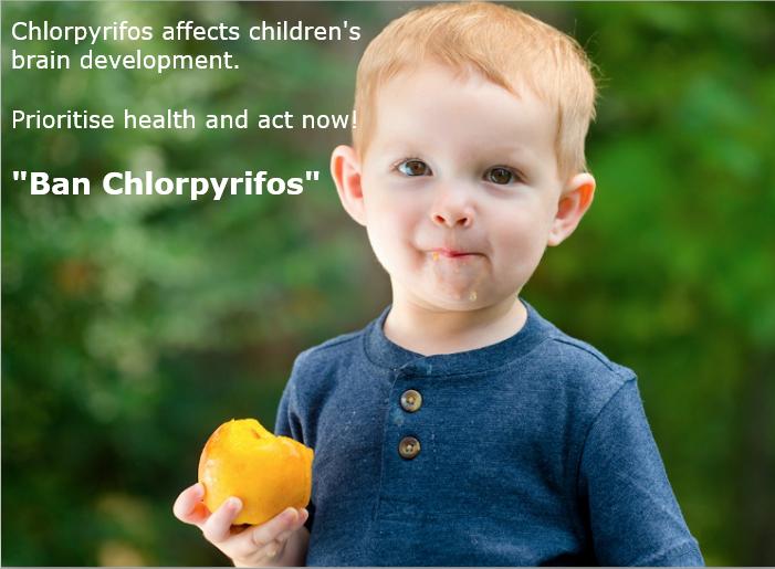 การแบนสารเคมีกำจัดศัตรูพืชอันตราย#3 คลอร์ไพริฟอส (Chlorpyrifos)